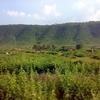 Dalma Wildlife Reserve