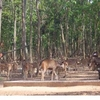 Dalma Santuario de Vida Silvestre