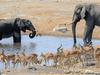 6 Days Etosha,Swakopmund And Sossusvlei Safari - Lodging