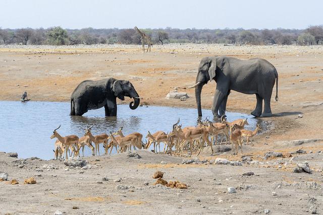 6 Days Etosha,Swakopmund And Sossusvlei Safari - Lodging Photos