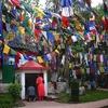 Darjeeling Flags