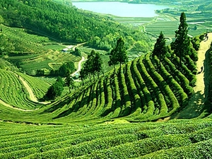 Darjeeling - Splendours of East