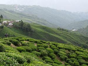 North East - Darjeeling - Gangtok Special Offer
