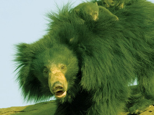 Daroji Bear Sanctuary