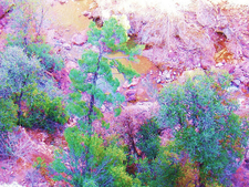 Davey Gowan Trail 48 - Tonto National Forest - Arizona - USA