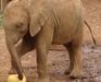 David Sheldrick Baby Elephant
