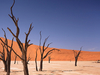 Deadvlei Landscape - Namibia