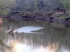 Deep Fork River