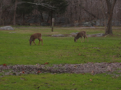 Deer Creek Picnic Site