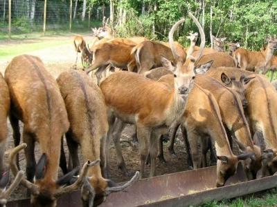 Deer Park Mežsētas