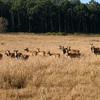 Deers At Jim Corbett National Park