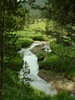 DeLacy Creek - Yellowstone - USA