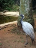 Umgeni River Bird Park