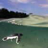 Derawan Archipelago - Indonesia