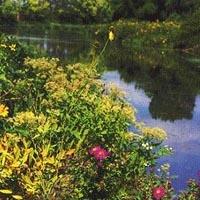 Des Plaines Fish And Wildlife Area