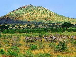 Masaai Mara Camping Safari for Singles and Couple Photos