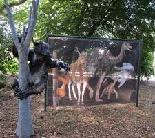 Dinosours Exibition
