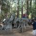 Discovery Tree Stump