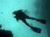 Divers @ Poor Knights NZ Island