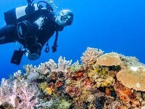 Unforgettable 9 Days 8 Nights Diving Adventure in Ocean Kenya Fotos