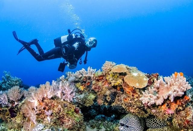 Unforgettable 9 Days 8 Nights Diving Adventure in Ocean Kenya Photos