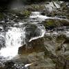 Salmon Dog Fish Pass Trail