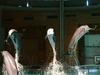 Dolphinarium In Särkänniemi