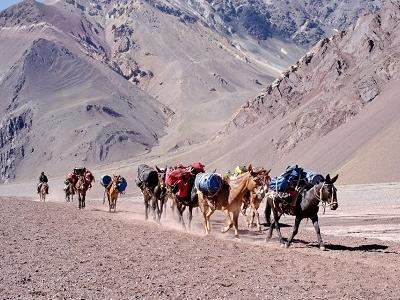 Donkey Train Hiking Mount Aconcagua - Argentina