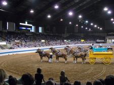 Draft Horses Arena
