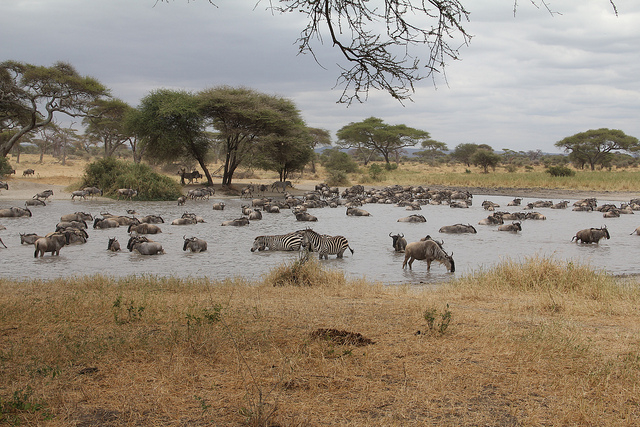 5 Days Wander Through Tanzania On A Safari-Midrange Photos