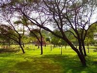 Dr. Ram Manohar Lohia Parque