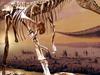 Albertosaurus At Royal Tyrrell Museum