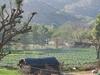 Scenic Mountain View Of Pushkar