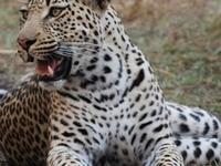 Day Trip to Okavango Delta And Moremi Game Reserve