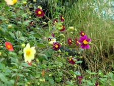 Assortment Of Flowers At Gun Hill