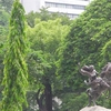 Against A Foliage Backdrop