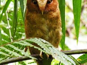 Endemic Birds of Sri Lanka Tour Fotos