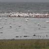 Flamingoes At Lake Nakuru