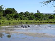 Keekorok Hippo Pool View