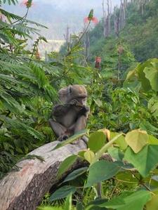 Monkey Munching