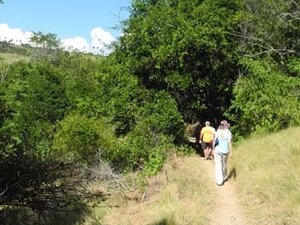 Rinca Loh Trail cocodrilo
