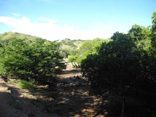 Open Hills & Sunshine