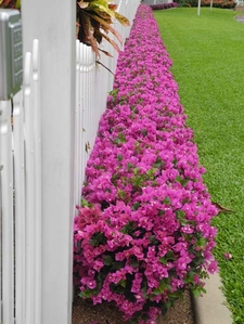 Government House Garden - Flower Arrangement