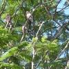 Trees, Birds & Blue Sky