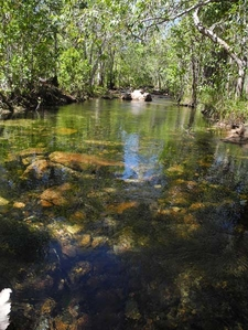 Crisscrossing Florence Creek