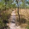 Shady Creek Trail View