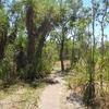 Florence Creek Trail View