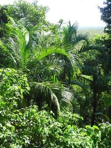 Lush Vegetation Along The Trail