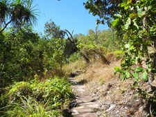 Loop Trail Views