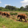 David Sheldrick Wildlife Trust - Nairobi